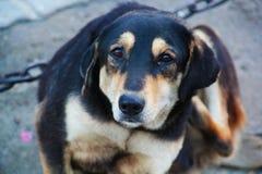 Himalayan Street Dog with Innocent Face stock photos