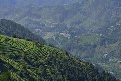 Himalayan Terrace Farming Stock Photo