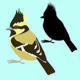 Himalayan tit πουλιών διανυσματική μαύρη σκιαγραφία ύφους απεικόνισης επίπεδη Στοκ Εικόνες