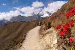 Himalayan Trail, Everest, Autumn, Himalayas Royalty Free Stock Photos