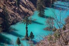 Himalayansparren en Himalayan-sparren in meer Overstroomd Bos royalty-vrije stock foto