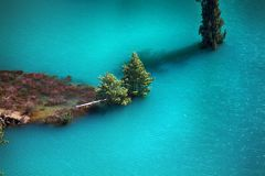 Himalayansparren en Himalayan-sparren in meer Overstroomd Bos stock afbeelding