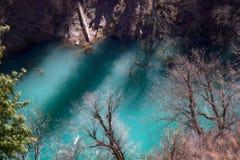 Himalayansparren en Himalayan-sparren in meer Overstroomd Bos stock afbeeldingen