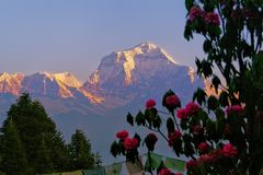 The Himalayas  and the flowers royalty free stock photos