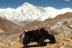 Himalayas. Gokyo Ri, Mountains of Nepal, snow covered high peaks and lake not far from Everest. Royalty Free Stock Image