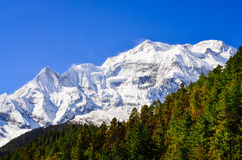 Himalayas mountain peak view of Annapurna II with trees in foreg Royalty Free Stock Image