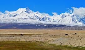 Himalayas. Sikt från den tibetana platån. Arkivfoto