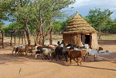 Himba by med traditionella kojor nära den Etosha nationalparken i Namibia royaltyfri foto