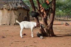 Himba by, Namibia Royaltyfri Bild