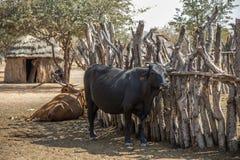 Himba village in Namibia Royalty Free Stock Photo