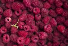 Himbeere, quadratischer Hintergrund Reife Beeren, viele Früchte, hell lizenzfreies stockfoto