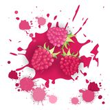 Himbeerfrucht-Logo Watercolor Splash Design Fresh-Naturkost Stockfotos