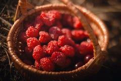 Himbeerkorb und -Sommerkollektion Ernte der Himbeere Das Konzept eines Antioxidans- und Superlebensmittels lizenzfreie stockbilder
