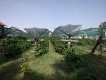 Himbeerplantagennetz geschützt Stockbild