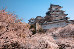Himeji castle. During spring season with blooming cherry trees Royalty Free Stock Photo