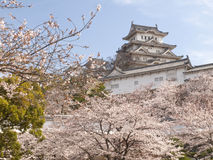 Himeji Castle in cherry blossom season Royalty Free Stock Photos