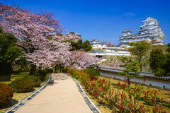 Himeji Castle in  cherry blossom season, Hyogo, Japan Stock Images