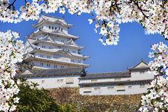 Himeji castle during cherry blossom time Royalty Free Stock Images