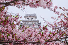 Himeji castle surrounded by cherry blossom. This is a UNESCO wor. Ld heritage site Stock Photos