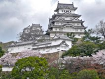 Himeji-Schloss während Sakura Stockbilder