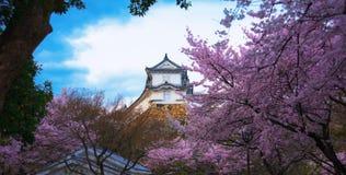 Himeji vit slott och körsbärsröd blomning royaltyfria bilder