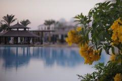 Himla- ställe - koppla av vid pölen med blommor på en helgferie i Egypten fotografering för bildbyråer