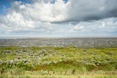 Himlar på Waddenzeen i norden av Nederländerna Arkivbild