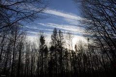 Himlen och skogen Arkivbilder