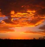 Himmel över Joshua Tree Arkivbild