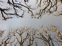 Himmel über der Gasse Stockfotografie