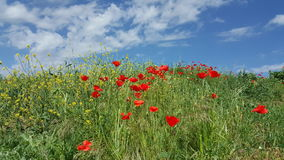 Himmel anf Blumen Stockfotografie