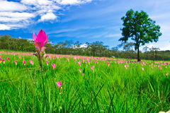 Himmel av jordningen Fotografering för Bildbyråer