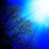 Himmel-Baumast-helle Strahln-Illustration lizenzfreie stockbilder