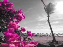 Himmel, blommor och Palma Royaltyfria Foton