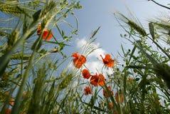 Himmel der Blumen Stockfotografie
