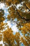 Himmel durch den Herbstlaub Stockfoto