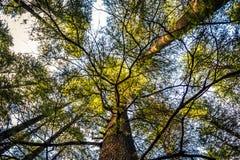 Himmel durch die Bäume Stockfotografie