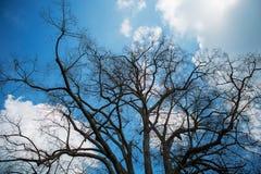 Himmel durch die Winterbaumaste Lizenzfreie Stockfotos