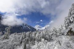 Himmel för 'för 〠för urtids- skog för rimfrost för kinesHailuogou glaciär blå, vitt moln, glaciär Arkivfoto