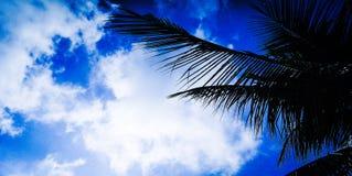 Himmel för ‹för blue†för ‹för and†för ‹för Coconut†‹tree†arkivbilder