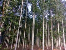 Himmel för plats för Prajinburi Thailand naturlandskap blå och stads- väg till den attraktiv naturliga känseln som är ny och att  Fotografering för Bildbyråer