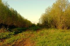 Himmel för skogbuskegränd Arkivfoton