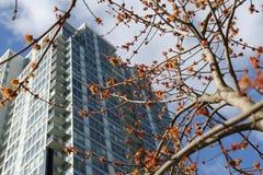 Himmel för skyskrapor för vårdag blå Arkivfoto