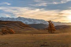 Himmel för solnedgång för bergträdhöst royaltyfri foto