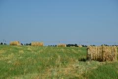 himmel för väder för solsken för torrt gräs för slåtter blå Royaltyfria Foton