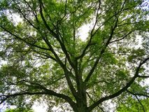 Himmel för vår för naturträdsolljus Royaltyfri Fotografi