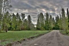 Himmel för vildmark för vägträdmorgon Royaltyfri Foto