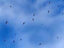 Himmel fördunklar fågelbakgrund Royaltyfria Bilder