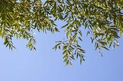 himmel Feld des grünen Grases gegen einen blauen Himmel mit wispy weißen Wolken Lizenzfreie Stockbilder