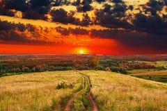 Himmel för fält för natur för sommar för väglandskapsolnedgång Arkivbild